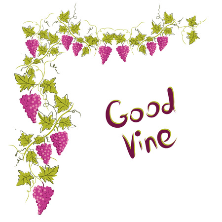 raceme: Stylized graphic image of a vine with grapes. Decorative square frame with branch of grapes, grape leaves. Good vine. Vector image.