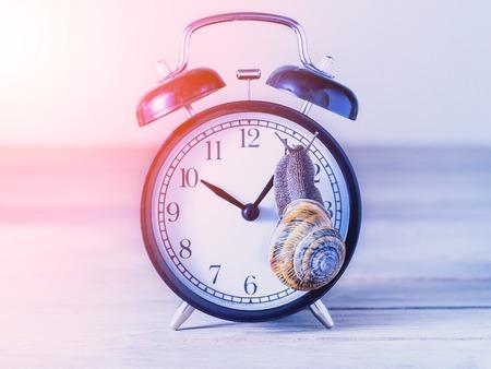 snail on an old alarm clock 스톡 콘텐츠