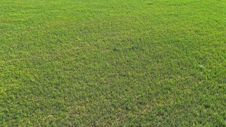 wild field, aerial view