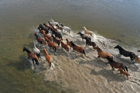 Horses are crossing the river. View from above.