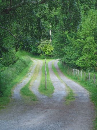 diverging: two roads diverging into a rural area