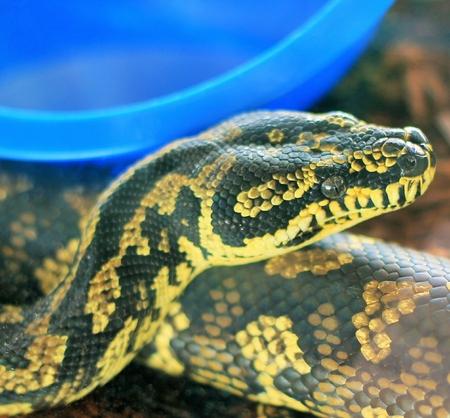 ジャングル カーペット Python 写真素材 - 31096931