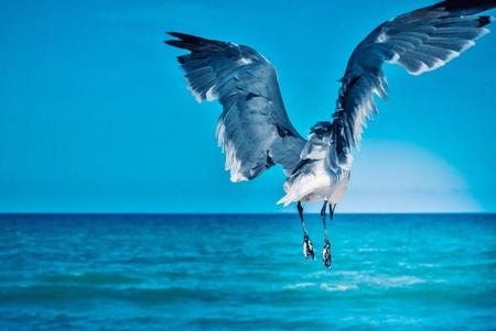 Sea Gull Ascending