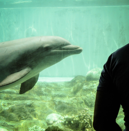 Smiling Dolphin in Aquarium 写真素材