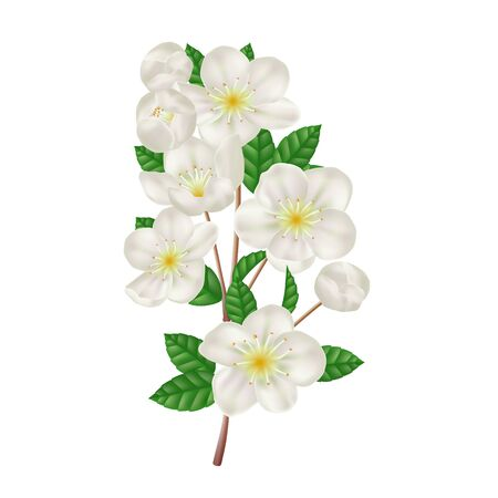 Blossoming apple branch with white flowers. Fresh spring flowers. Realistic vector illustration