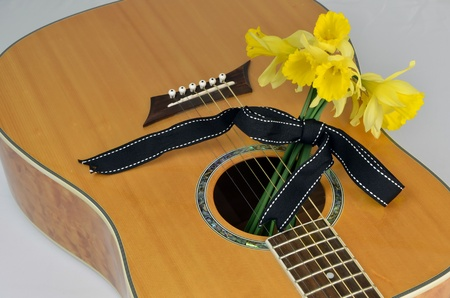 Narcissus pseudonarcissus (daffodil) On Guitar photo
