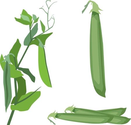 Illustration of a pea pod, climbing plant  イラスト・ベクター素材