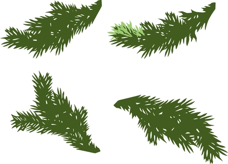 winter spruce branch, green spruce branches