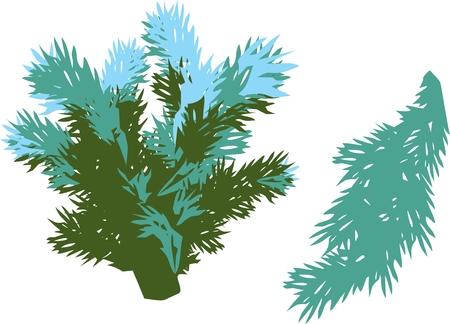 winter spruce branch, green spruce branches Illustration