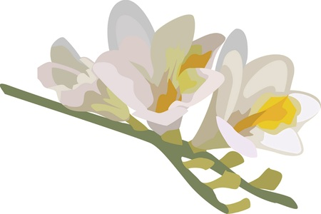 branch of freesia on a white background
