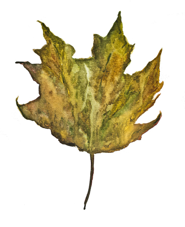 autumn leaf on a white background, watercolor drawing Stock Photo