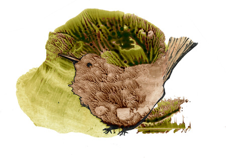 a bird sitting in green grass, abstract watercolor illuatration Standard-Bild - 125432001