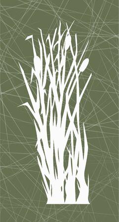 reeds on the green background, white reed illustration Standard-Bild - 125432061