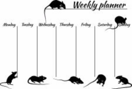 the weekly planner with rats for 2020 new year, template