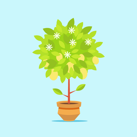 Big money tree in a pot. The growth of financial wealth. Isolated on white background. Vector, illustration EPS10.