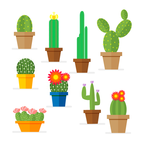 Set of cactus in a pot. Domestic plant with flowers for the decoration of the room.