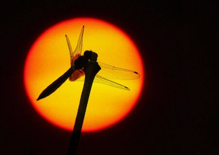 Sunset and the dragonfly Stock Photo - 5536069