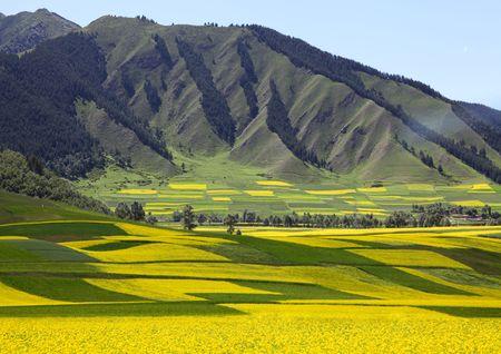 plateau: China Plateau Field Stock Photo