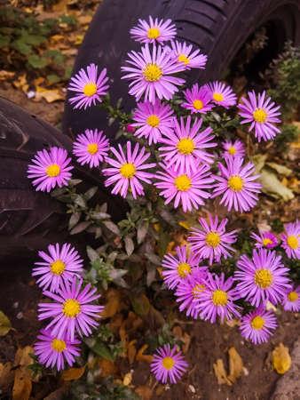 Bright flowers in the autumn garden