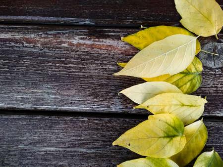 Leaves background on wood