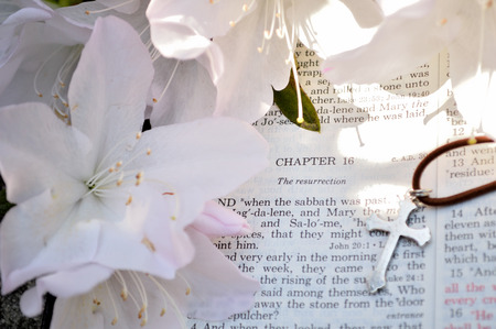 Mark 16 Easter Sunday scripture background with flowers.