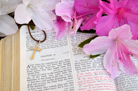 king james: Mark 16 Easter Sunday scripture background with flowers.