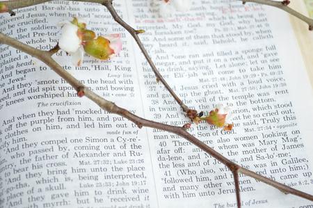 scripture: Good Friday, crucifixion scripture background.
