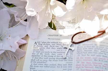 arose: Mark 16 Easter Sunday scripture background with flowers. Closeup of the account in the gospel of St. Mark where Jesus arose from the dead. Religious, christian image good for use on church bulletins, websites, etc. Flowers are azaleas. Stock Photo