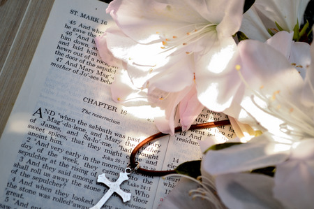bulletins: Mark 16 Easter Sunday scripture background with flowers. Closeup of the account in the gospel of St. Mark where Jesus arose from the dead. Religious, christian image good for use on church bulletins, websites, etc. Flowers are azaleas. Stock Photo