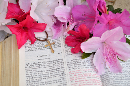 arise: Mark 16 Easter Sunday scripture background with flowers. Closeup of the account in the gospel of St. Mark where Jesus arose from the dead. Religious, christian image good for use on church bulletins, websites, etc.