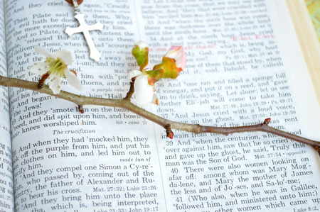 king james: Good Friday, crucifixion scripture background. Closeup of King James version Bible page. Open to the gospel of Mark, chapter 15. With beautiful thorny, budding branches and a silver cross laid over the page.