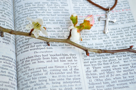 Good Friday, crucifixion scripture background. Closeup of King James version Bible page. Open to the gospel of Mark, chapter 15. With beautiful thorny, budding branches and a silver cross laid over the page.