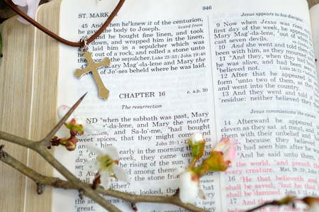 bulletins: Mark 16 Easter Sunday scripture background with flowers. Closeup of the account in the gospel of St. Mark where Jesus arose from the dead. Religious, christian image good for use on church bulletins, websites, etc.