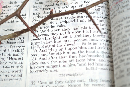 Good Friday, crucifixion scripture background. Closeup of King James version Bible page. Open to the gospel of Matthew, chapter 27. With thorns to remind of the crown of thorns Christ wore.