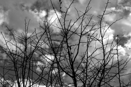noire: Black branches against a stormy gray sky. Stock Photo