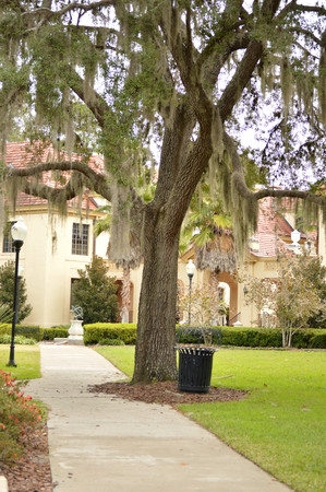 public waste: Photo of an old oak tree with moss hanging from branches, with black trash can beside it, both standin by a concrete sidewalk that goes off in the distance towards a large, spanish colonial building. Photo taken in a park in Gainesville Florida Stock Photo