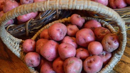 フロリダ州で採れた、新鮮な新しいジャガイモのバスケット。バスケット、赤い肌の新しいジャガイモは、スキンをまだ生で新鮮な食材。