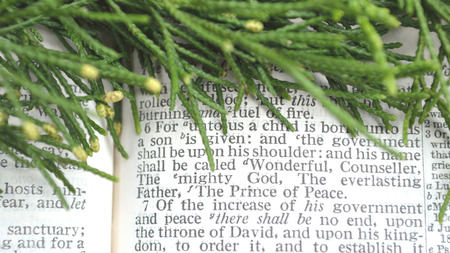 verse: Green cedar branches with messianic prophecy of the coming of Christ in the book of Isaiah, chapter 9, verse 6.