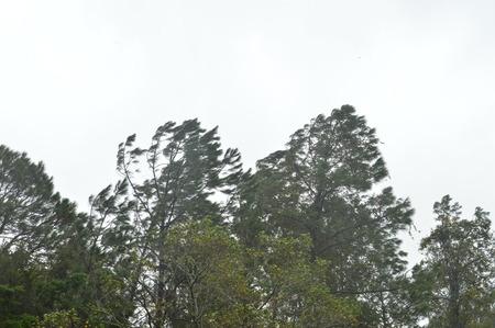 北の中央フロリダ、2016 年 10 月 7 日正午ごろ、ブラッドフォード郡に移動ハリケーン マシュー。60 ~ 70 mph の突風で 30 に 50 mph の風します。 報道画像