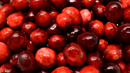Closeup of bright red cranberries being washed and drained for cooking with. Stock Photo