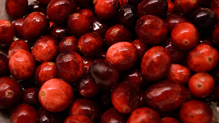drained: Closeup of bright red cranberries being washed and drained for cooking with. Stock Photo