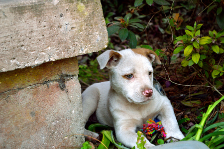 stray: Spotted, mixed breed, puppy laying behind a concrete porch step, in bushes with colorful chew toy.