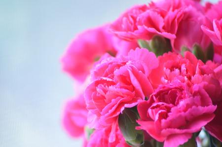 Bright pink carnations, cut flower arrangement. Stock Photo