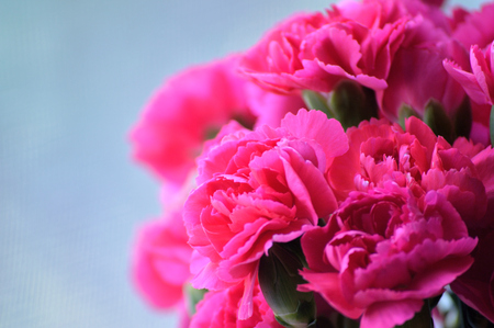 Bright pink carnations, cut flower arrangement. Stok Fotoğraf