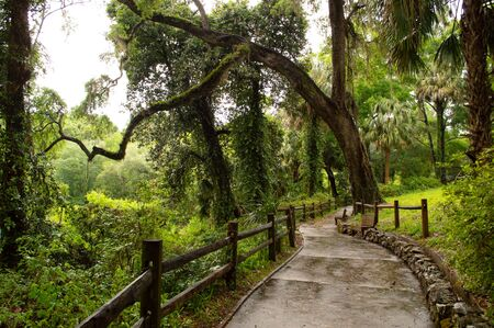 Beautiful winding concrete footpath, that meanders through the Florida jungle area of Rainbow Springs