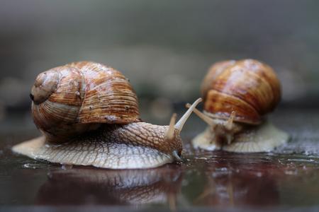 Dwa biegające ślimaki - wyglądały jak ścigały, chociaż to była naprawdę forma zalotów Zdjęcie Seryjne