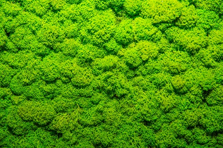 Green Moss soft background, mossy texture