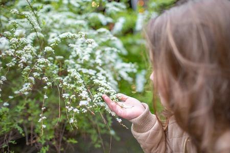 Little girl and Bird Cherry flowers. little girl sniffs a bush of white flowers