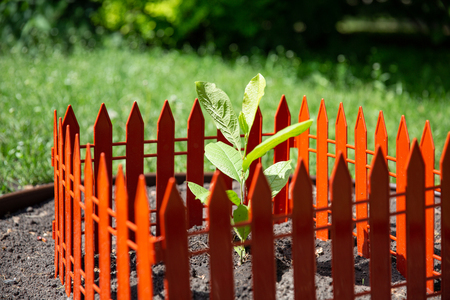 single green plant in planter. landscape orientation, shallow depth of field, The sprout is fenced with a red fence. Protaction