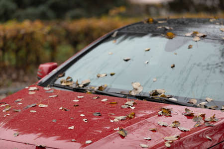 Drops of autumn rain fall on a red car covered with fallen leaves. The background is blurred.